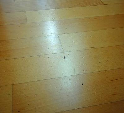 heels-vs-laminate-flooring-guess-who-won-img_20170905_201444-1-.jpg