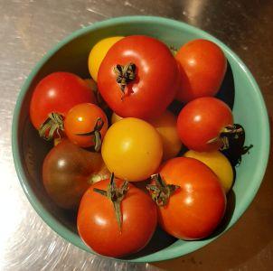 Name:  tomatoes.jpg Views: 158 Size:  74.5 KB