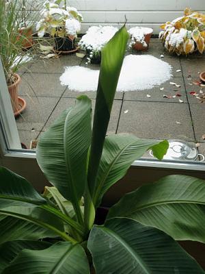 how-about-gardening-thread-firstsnow2012-10-28.jpg