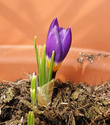 how-about-gardening-thread-fzjycolumn19d.jpg