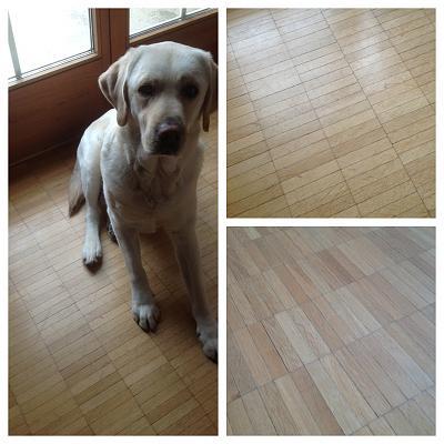 repairing-hardwood-floor-scratches-diptic.jpg