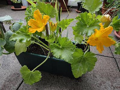 how-about-gardening-thread-zukefiori2013-07-03-01.jpg