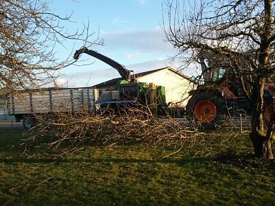 cutting-down-tree-hp-erne.jpg