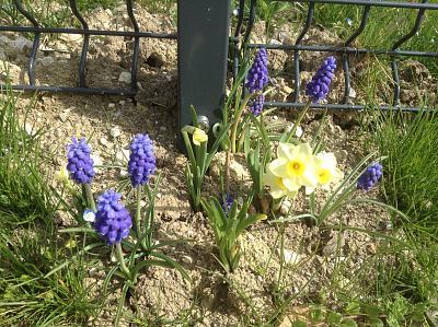 how-about-gardening-thread-image.jpg