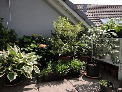 how-about-gardening-thread-balkon2013-06-26-04.jpg