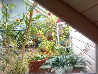 how-about-gardening-thread-balkonview.jpg
