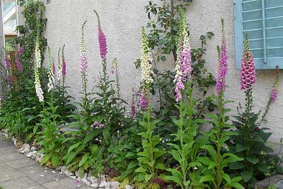 how-about-gardening-thread-2-junie-2014.jpg