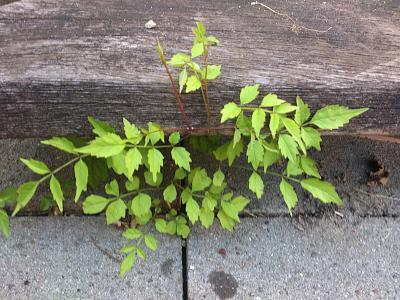 how-about-gardening-thread-dsc_1126.jpg