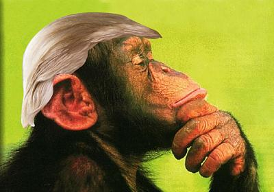 will-trump-good-president-trumpanzee-thinking.jpg