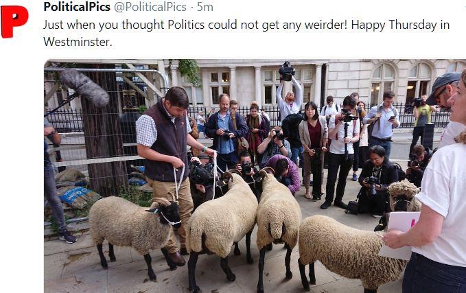 Name:  sheep.JPG Views: 236 Size:  78.1 KB