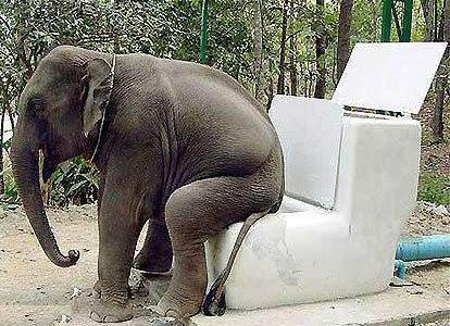 http://www.englishforum.ch/attachments/international-affairs-politics/53278d1353320583-happy-world-toilet-day-19-11-welttoilettentag-elephantpotty.jpg