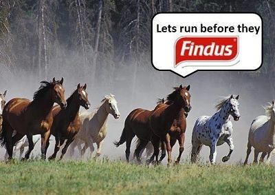 british-horsemeat-scandal-focus-remains-unfocussed-img_7820.jpg