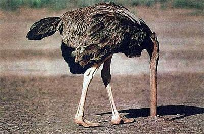 repeating-tragedy-immigrants-dying-reach-europe-ostrich_head_in_sand.jpg