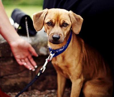 immediate-medium-term-dog-carer-needed-image.jpg
