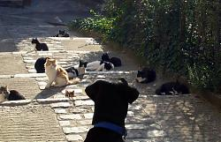 funny-cats-07-peillon-06.jpg