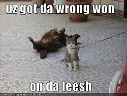 funny-cats-funny-pictures-cat-leash.jpg
