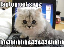 funny-cats-funny-pictures-kitten-laptop.jpg