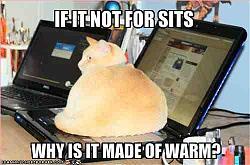 funny-cats-keyboard.jpg
