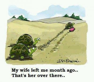repertoire-terrible-jokes-i-challenge-you-funny-tortoise-cartoon.jpg