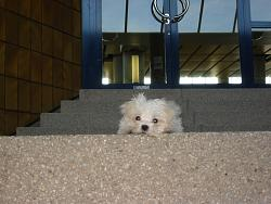 funny-dogs-anyone-has-silly-dog-pics-share-nu-nu-041.jpg