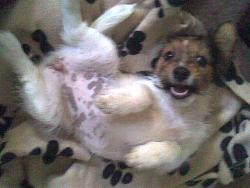 funny-dogs-anyone-has-silly-dog-pics-share-i-bend-way-aug07.jpg