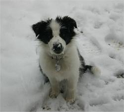 funny-dogs-anyone-has-silly-dog-pics-share-hally_in_snow.jpg