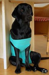 funny-dogs-anyone-has-silly-dog-pics-share-u-surgery-2n.jpg