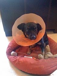 funny-dogs-anyone-has-silly-dog-pics-share-img_0291.jpg