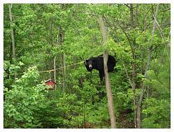 what-day-bear-2.jpg
