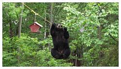 what-day-bear2.jpg