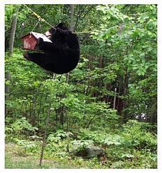 what-day-bear4.jpg
