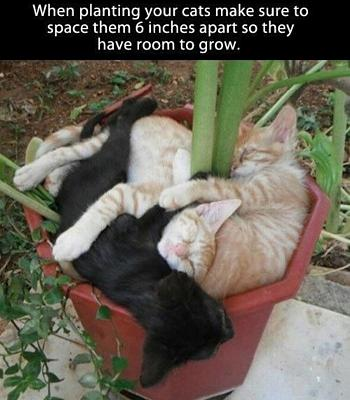 funny-cats-image.jpg