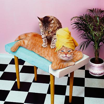 funny-cats-cat-massage.jpg