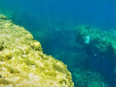 how-do-you-make-maltese-cross-reef.jpg