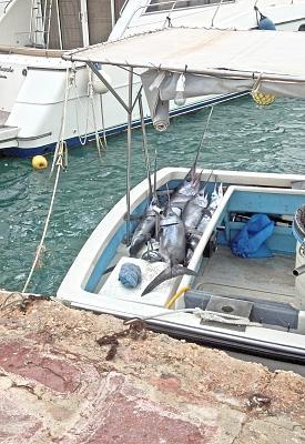 how-do-you-make-maltese-cross-catch-day.jpg