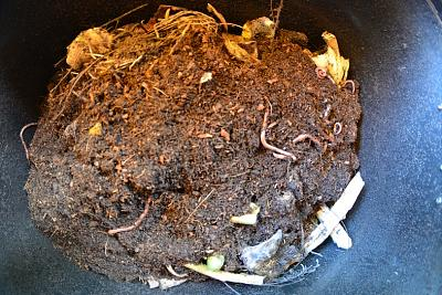 worm-composting-vermiculture-has-anyone-tried-wormbin.jpg