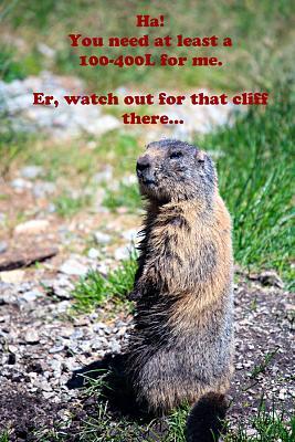 wildlife-animals-where-you-grimsel-marmot-long-lens.jpg