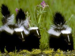 wildlife-animals-where-you-2251_600x450-cb1263583982.jpg