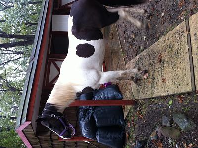 horse-available-riding-img_0759.jpg