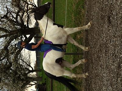 horse-available-riding-img_1353-1-.jpg