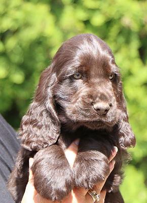 dogging-well-puppying-10986664_1071674802847197_5614573557700950448_o.jpg