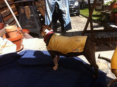 cooling-vests-dogs-image.jpg