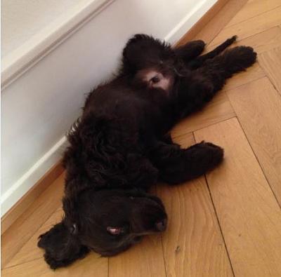 dogging-well-puppying-wood.jpg