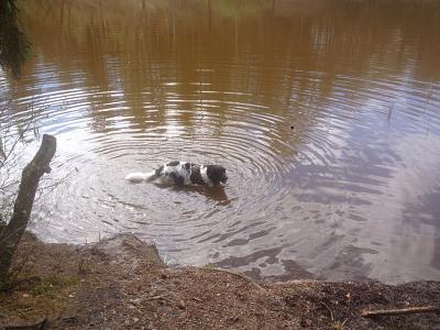 dogging-well-puppying-img-20150417-wa004.jpg