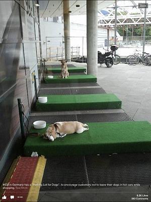 yet-again-dogs-cars-image.jpg