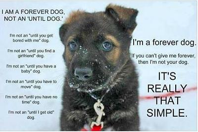 forever-dog-forever-dog.jpg