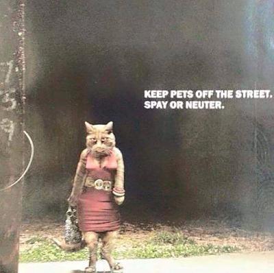 kitten-wanted-cats.jpg