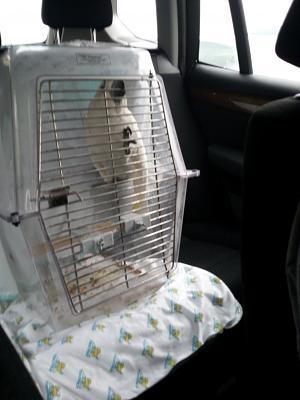 cat-harness-car-legal-ch-tsuki-going-hotel-13.11.2014.jpg