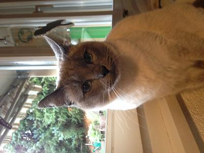 need-advice-cat-ownership-question-img_0654.jpg