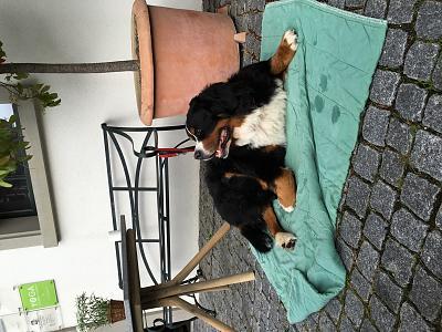 surgery-dog-s-knee-ligament-tear-image.jpg